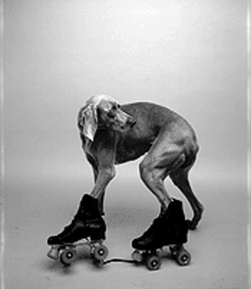 """It's a Dog's Life: Photographs by William Wegman from the Polaroid Collection"""