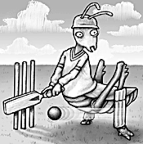 Cricket it