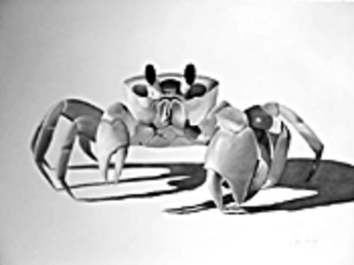 Clark Prosperi's alarming and whimsical crab