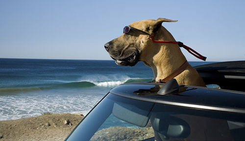 Marmaduke, livin' large in California.