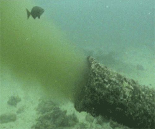 The Boynton outfall pipe blows out about 13 million gallons of treated sewage a day, drawing schools of ravenous fish.