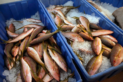 Fresh fish are kept on ice at Florida's Finest in Lauderhill.