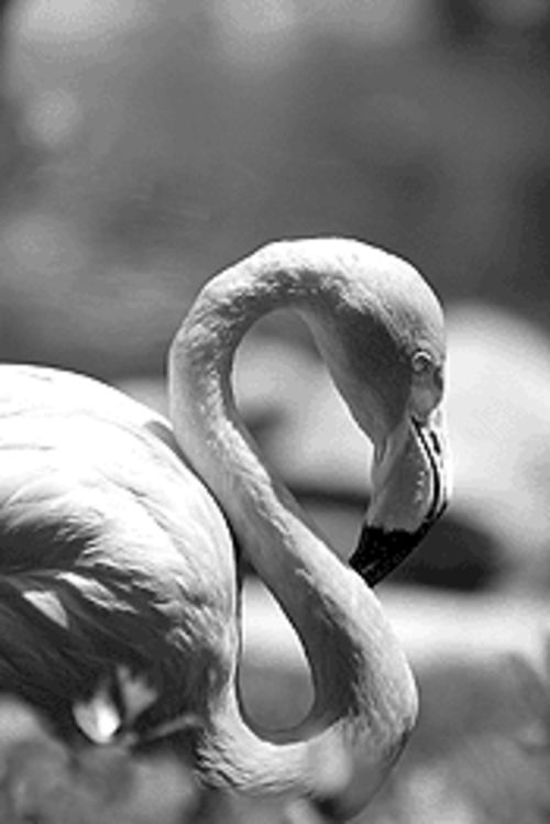 Flamingo Gardens honors all you hard-workin' folks on Labor Day.