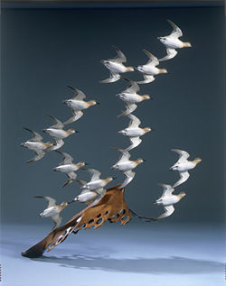 &quot;The Brilliance of Birds: The Sculpture of Grainger McKoy&quot;