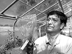 Plant scientist Min Rayamajhi has helped develop a small army of insects in the battle against melaleuca.
