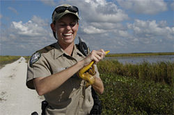 When a yellow rat snake dives down her shirt, Lindsay Bruening just laughs.