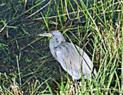 No bird in the hand at Everglades National Park