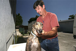 Joe Trudden says he gives every dog a dip in the whirlpool and a hand massage after a race.