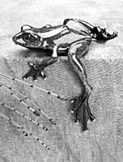 Frog in the key of bronze
