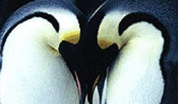 Aww... penguin love