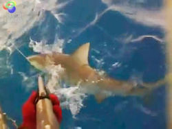 A still from Mike McLaughlin's shark-hunting video.