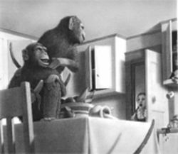 Monkey see, Allsburg draw.