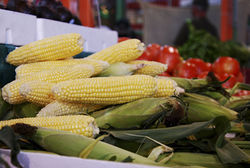 Corn on the cob, fresh from the farm. April McKay