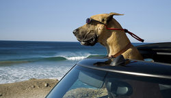 Marmaduke, livin&#039; large in California.