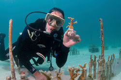 Ken Nedimyer of the Coral Restoration Foundation grows coral in an underwater nursery in Key Largo.